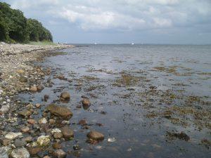 strand med mange sten