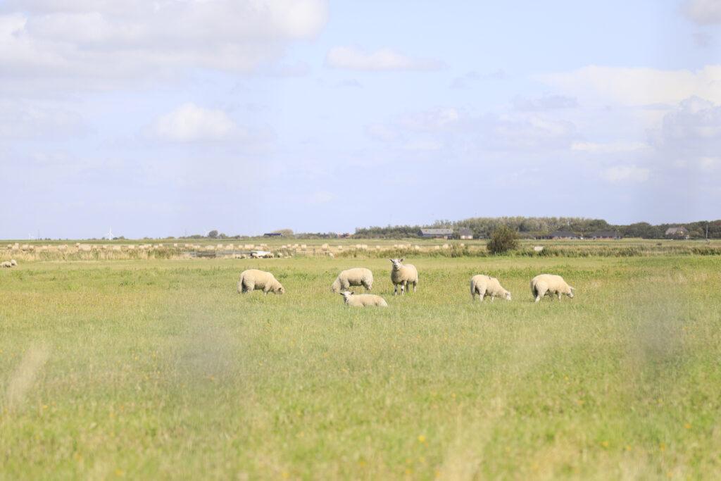 flere får