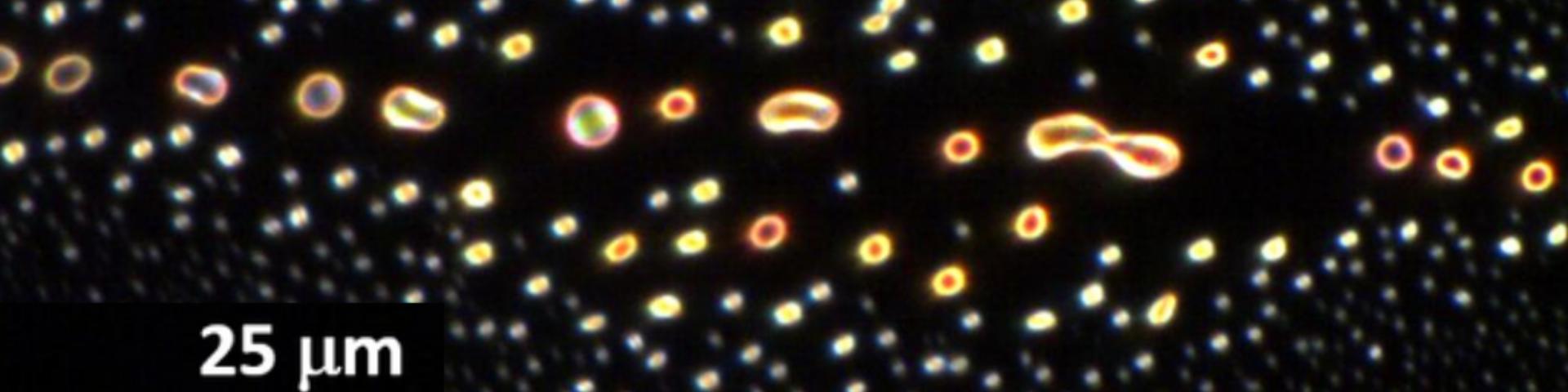 Nanopartikler